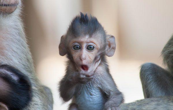 Im Zoo über die Affen lachen