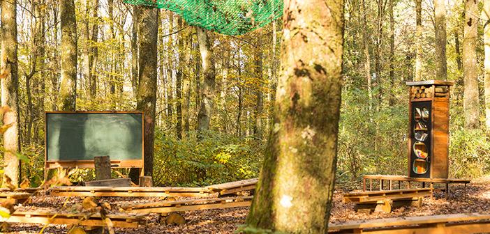Ein grünes Klassenzimmer lehrt unter anderem Naturverbundenheit.